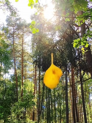 Leaf_forest